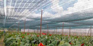 giá bán lưới che nắng tốt nhất tại TPHCM
